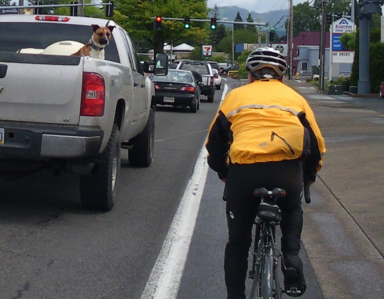 Dog in pickup truck stares down a cyclist in the bike lane